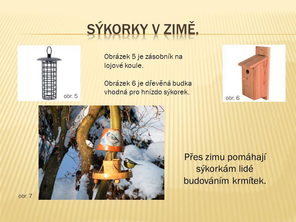 obr. 5 obr. 7 Přes zimu pomáhají sýkorkám lidé budováním krmítek.