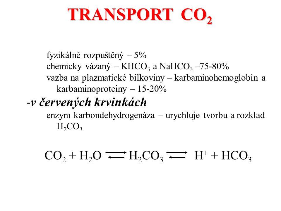 fyzikálně rozpuštěný – 5% chemicky vázaný – KHCO 3 a NaHCO 3 –75-80% vazba na plazmatické bílkoviny – karbaminohemoglobin a karbaminoproteiny – 15-20% -v červených krvinkách enzym karbondehydrogenáza – urychluje tvorbu a rozklad H 2 CO 3 TRANSPORT CO 2 CO 2 + H 2 O H 2 CO 3 H + + HCO 3