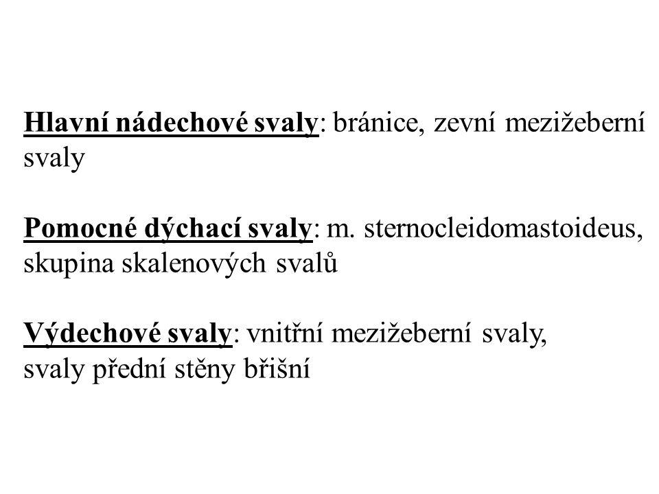 Hlavní nádechové svaly: bránice, zevní mezižeberní svaly Pomocné dýchací svaly: m.