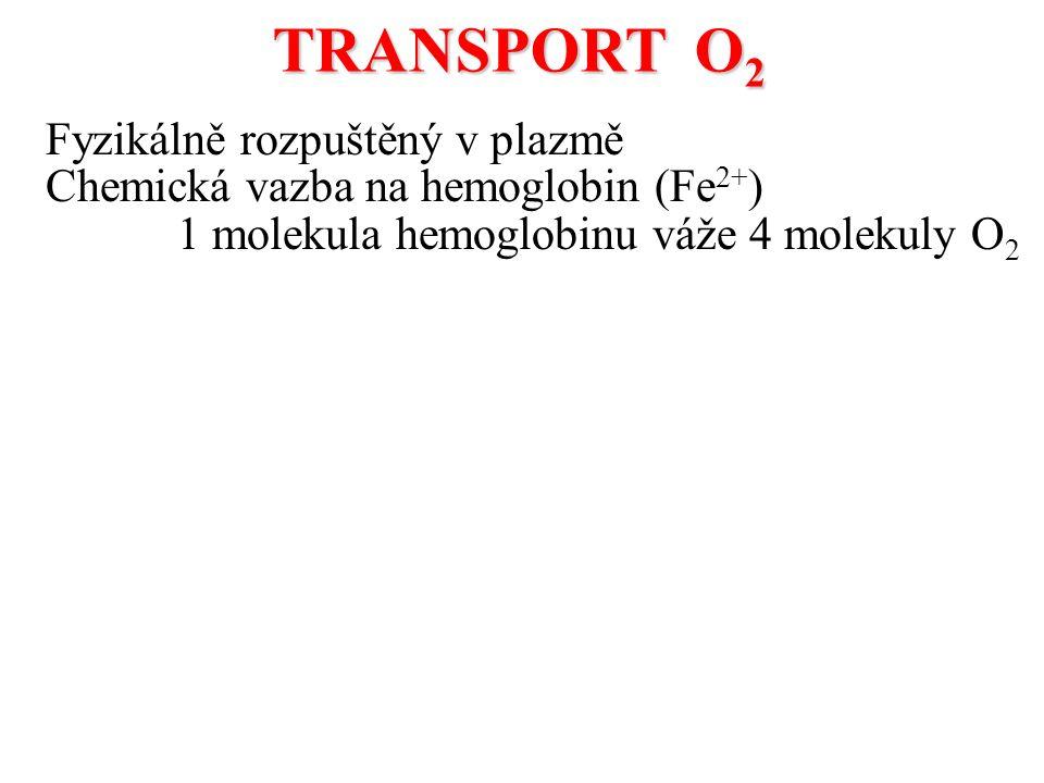 Fyzikálně rozpuštěný v plazmě Chemická vazba na hemoglobin (Fe 2+ ) 1 molekula hemoglobinu váže 4 molekuly O 2 TRANSPORT O 2