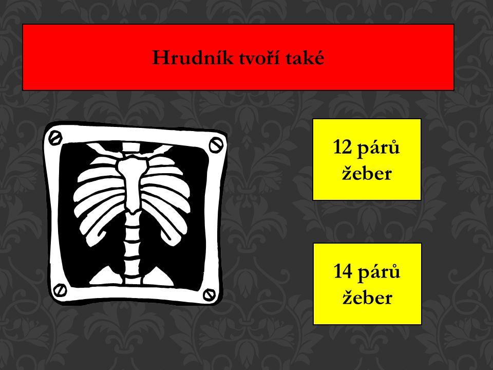 Hrudník tvoří také 12 párů žeber 14 párů žeber