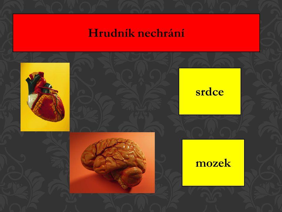 Hrudník nechrání srdce mozek