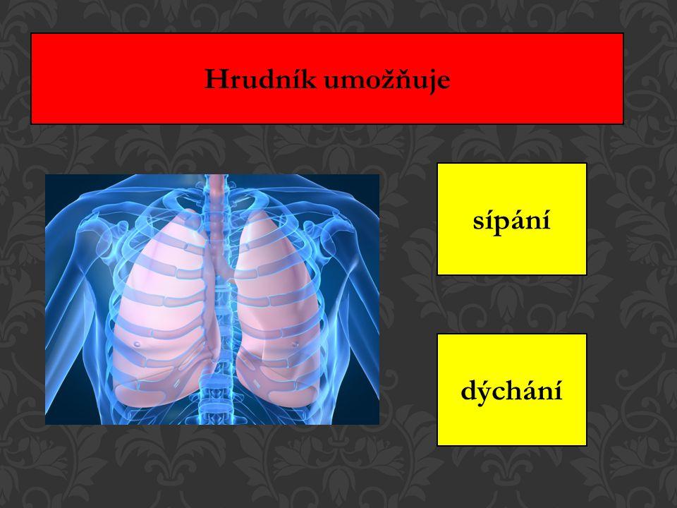 Hrudník umožňuje sípání dýchání