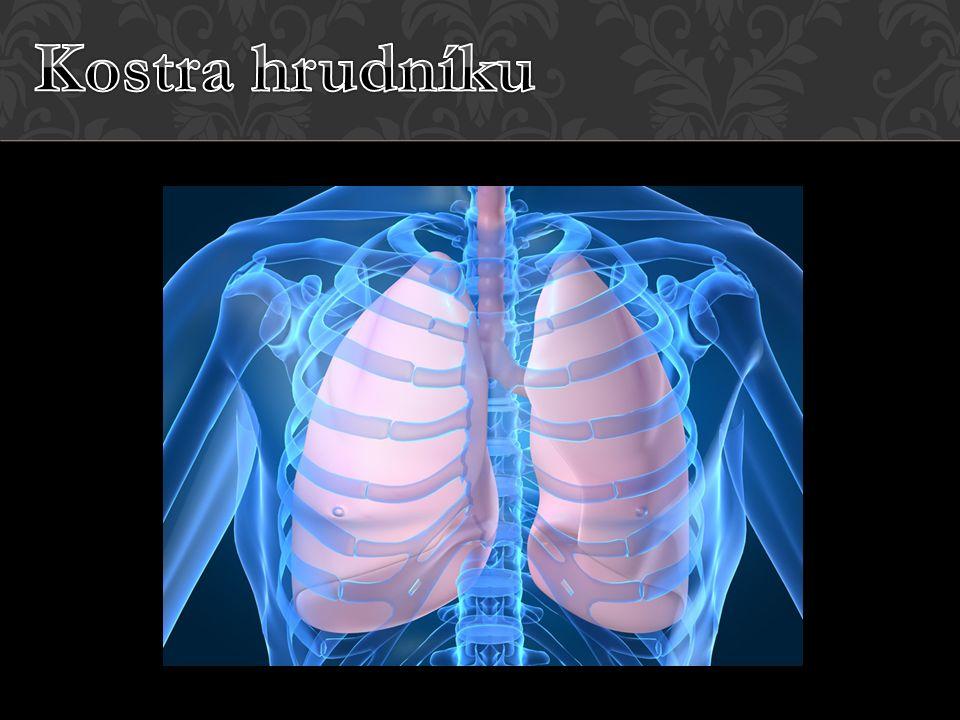 HRUDNÍ KOŠ TVOŘÍ Kost hrudní 12 párů žeber 12 párů obratlů hrudních FUNKCE – ochrana vnitřních orgánů (např.