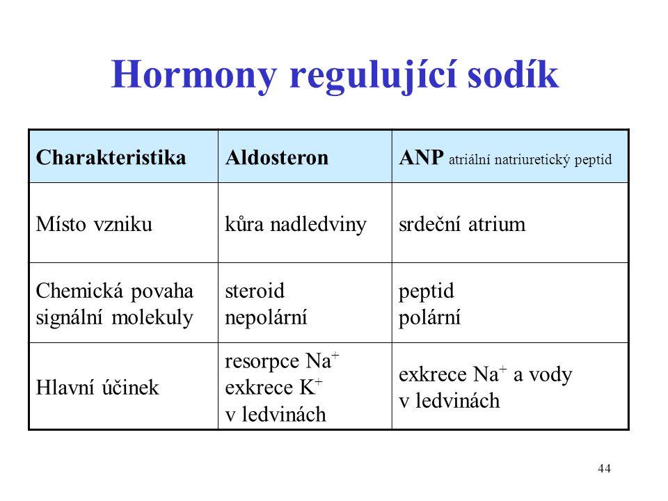 44 Hormony regulující sodík CharakteristikaAldosteronANP atriální natriuretický peptid Místo vznikukůra nadledvinysrdeční atrium Chemická povaha signální molekuly steroid nepolární peptid polární Hlavní účinek resorpce Na + exkrece K + v ledvinách exkrece Na + a vody v ledvinách