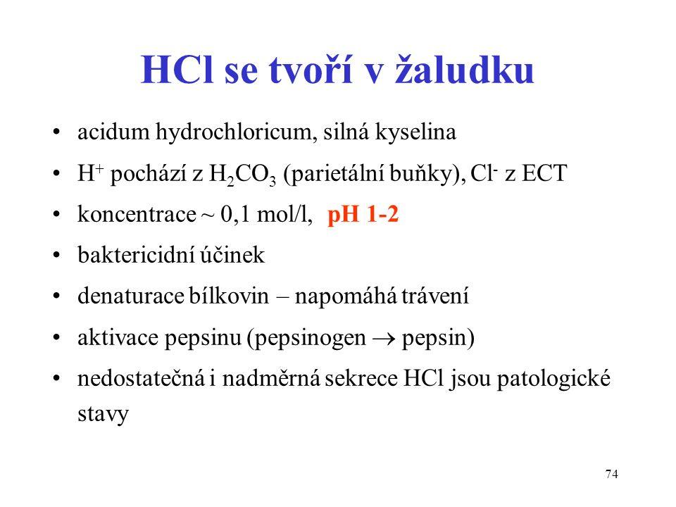 74 HCl se tvoří v žaludku acidum hydrochloricum, silná kyselina H + pochází z H 2 CO 3 (parietální buňky), Cl - z ECT koncentrace ~ 0,1 mol/l, pH 1-2 baktericidní účinek denaturace bílkovin – napomáhá trávení aktivace pepsinu (pepsinogen  pepsin) nedostatečná i nadměrná sekrece HCl jsou patologické stavy