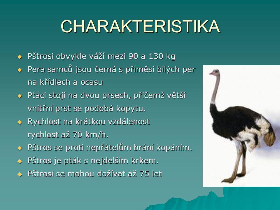 CHARAKTERISTIKA  Pštrosi obvykle váží mezi 90 a 130 kg  Pera samců jsou černá s příměsí bílých per na křídlech a ocasu  Ptáci stojí na dvou prsech, přičemž větší vnitřní prst se podobá kopytu.