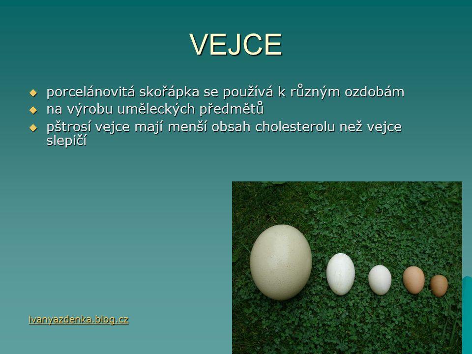 VEJCE  porcelánovitá skořápka se používá k různým ozdobám  na výrobu uměleckých předmětů  pštrosí vejce mají menší obsah cholesterolu než vejce slepičí ivanyazdenka.blog.cz