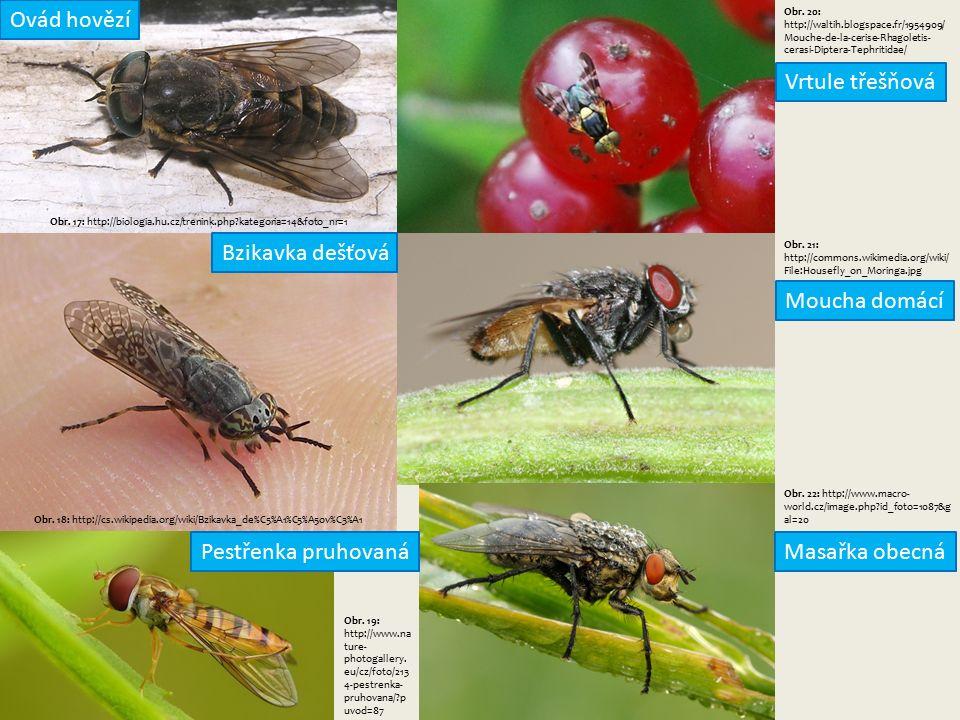 Obr. 17: http://biologia.hu.cz/trenink.php kategoria=14&foto_nr=1 Obr.