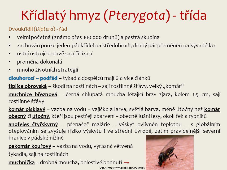 """Křídlatý hmyz (Pterygota) - třída Dvoukřídlí (Diptera) - řád velmi početná (známo přes 100 000 druhů) a pestrá skupina zachován pouze jeden pár křídel na středohrudi, druhý pár přeměněn na kyvadélko ústní ústrojí bodavě sací či lízací proměna dokonalá mnoho životních strategií dlouhorozí – podřád dlouhorozí – podřád – tykadla dospělců mají 6 a více článků tiplice obrovská – škodí na rostlinách – sají rostlinné šťávy, velký """"komár muchnice březnová – černá chlupatá moucha létající brzy zjara, kolem 1,5 cm, sají rostlinné šťávy komár pisklavý – vazba na vodu – vajíčko a larva, světlá barva, méně útočný než komár obecný či útočný, kteří jsou pestřeji zbarvení – obecně lužní lesy, okolí řek a rybníků anofeles čtyřskvrný – přenašeč malárie – výskyt ovlivněn teplotou – s globálním oteplováním se zvyšuje riziko výskytu i ve střední Evropě, zatím pravidelnější severní hranice v pádské nížině pakomár kouřový – vazba na vodu, výrazná větvená tykadla, sají na rostlinách → muchnička – drobná moucha, bolestivé bodnutí → Obr."""