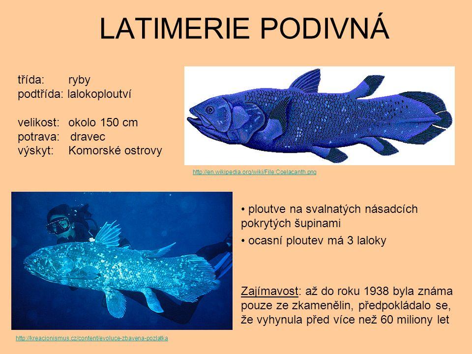 LATIMERIE PODIVNÁ ploutve na svalnatých násadcích pokrytých šupinami ocasní ploutev má 3 laloky Zajímavost: až do roku 1938 byla známa pouze ze zkamenělin, předpokládalo se, že vyhynula před více než 60 miliony let třída: ryby podtřída: lalokoploutví velikost: okolo 150 cm potrava: dravec výskyt: Komorské ostrovy http://kreacionismus.cz/content/evoluce-zbavena-pozlatka http://en.wikipedia.org/wiki/File:Coelacanth.png