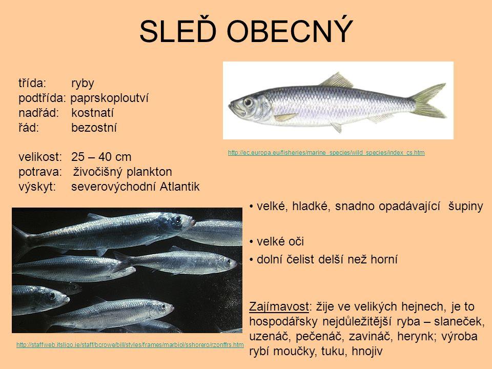 SLEĎ OBECNÝ velké, hladké, snadno opadávající šupiny velké oči dolní čelist delší než horní Zajímavost: žije ve velikých hejnech, je to hospodářsky nejdůležitější ryba – slaneček, uzenáč, pečenáč, zavináč, herynk; výroba rybí moučky, tuku, hnojiv třída: ryby podtřída: paprskoploutví nadřád: kostnatí řád: bezostní velikost: 25 – 40 cm potrava: živočišný plankton výskyt: severovýchodní Atlantik http://ec.europa.eu/fisheries/marine_species/wild_species/index_cs.htm http://staffweb.itsligo.ie/staff/bcrowe/bill/styles/frames/marbiol/sshorero/rzonffrs.htm