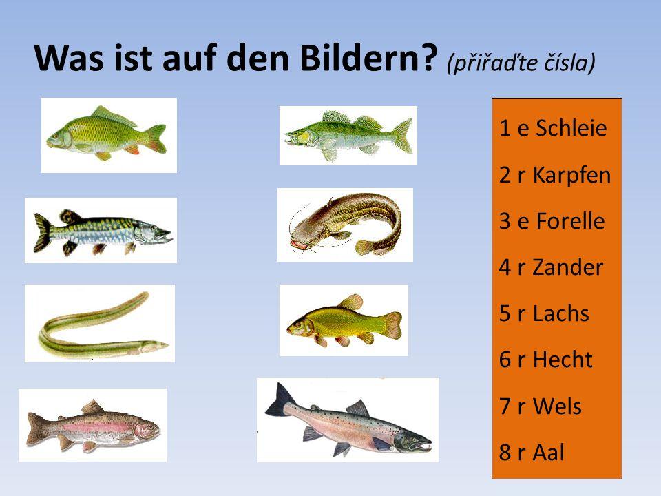 1 e Schleie 2 r Karpfen 3 e Forelle 4 r Zander 5 r Lachs 6 r Hecht 7 r Wels 8 r Aal Lösung (řešení) 2 1 6 3 8 7 4 5
