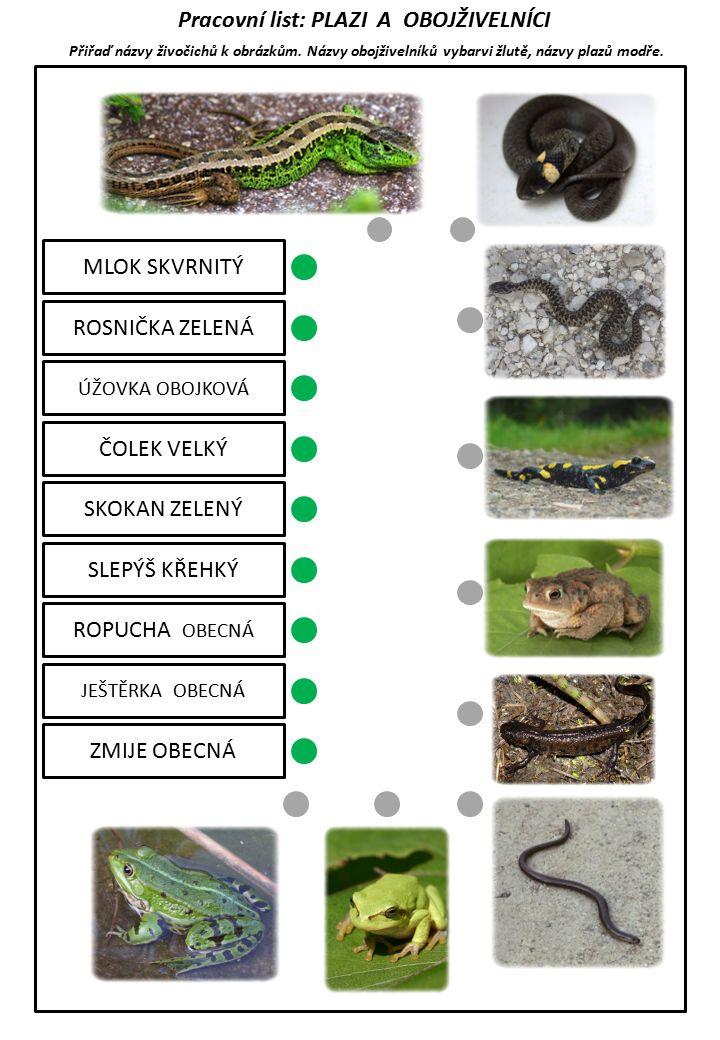 Pracovní list: PLAZI A OBOJŽIVELNÍCI Přiřaď názvy živočichů k obrázkům.