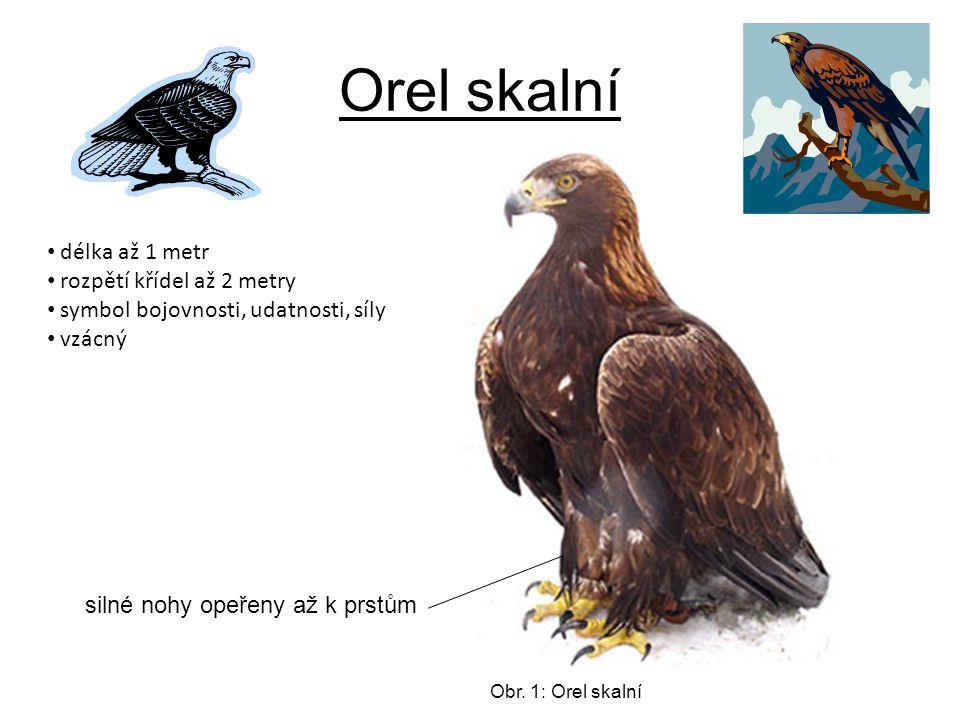 Orel skalní Obr.