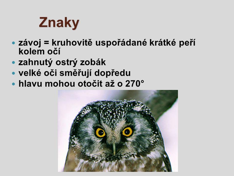 Znaky závoj = kruhovitě uspořádané krátké peří kolem očí zahnutý ostrý zobák velké oči směřují dopředu hlavu mohou otočit až o 270°