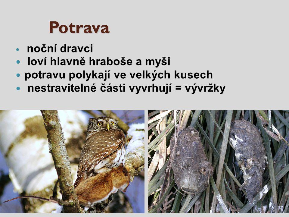 Potrava noční dravci loví hlavně hraboše a myši potravu polykají ve velkých kusech nestravitelné části vyvrhují = vývržky