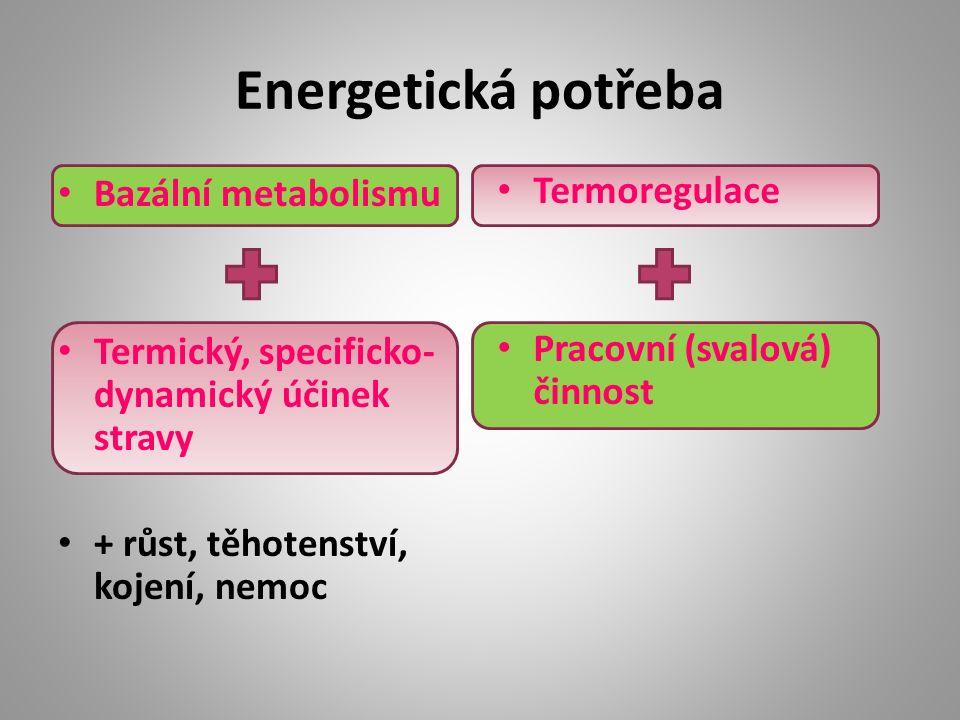 Energetická potřeba Bazální metabolismu Termický, specificko- dynamický účinek stravy + růst, těhotenství, kojení, nemoc Termoregulace Pracovní (svalová) činnost