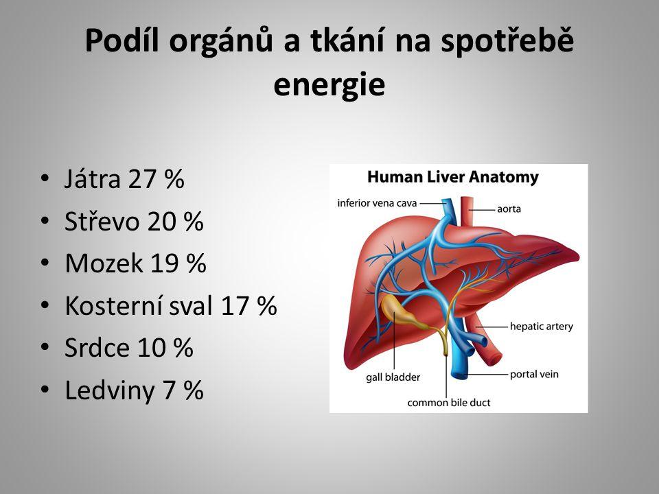 Podíl orgánů a tkání na spotřebě energie Játra 27 % Střevo 20 % Mozek 19 % Kosterní sval 17 % Srdce 10 % Ledviny 7 %