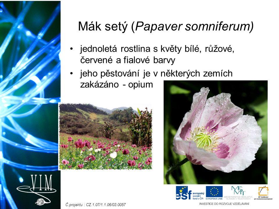 Č.projektu : CZ.1.07/1.1.06/03.0057 Mák setý (Papaver somniferum) jednoletá rostlina s květy bílé, růžové, červené a fialové barvy jeho pěstování je v některých zemích zakázáno - opium