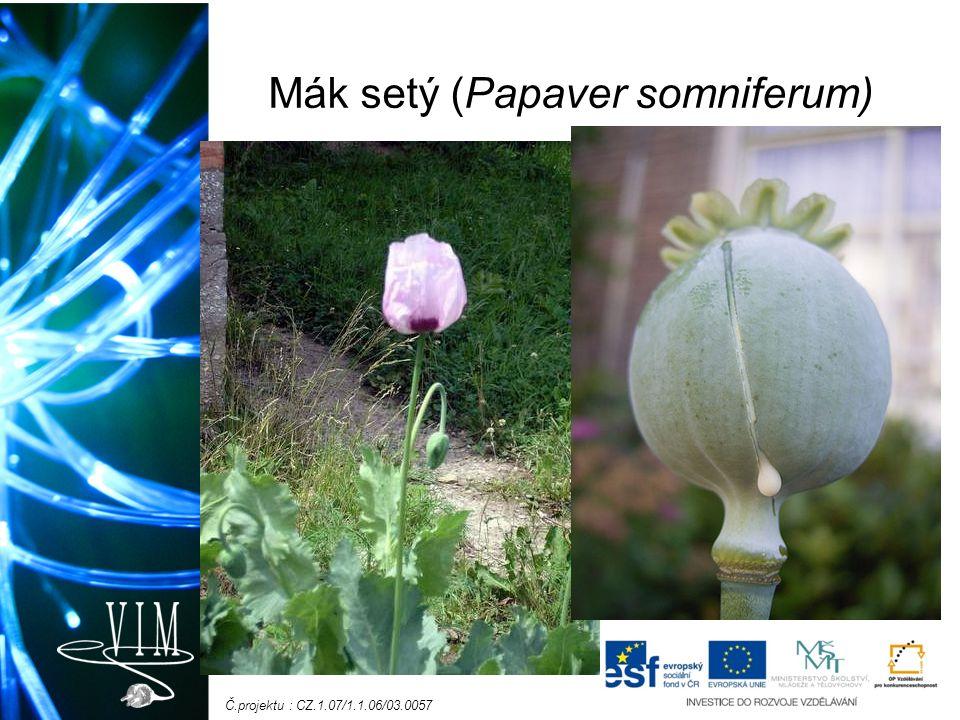 Č.projektu : CZ.1.07/1.1.06/03.0057 Mák setý (Papaver somniferum)