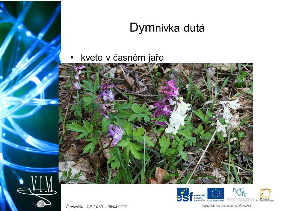 Č.projektu : CZ.1.07/1.1.06/03.0057 Dym nivka dutá kvete v časném jaře