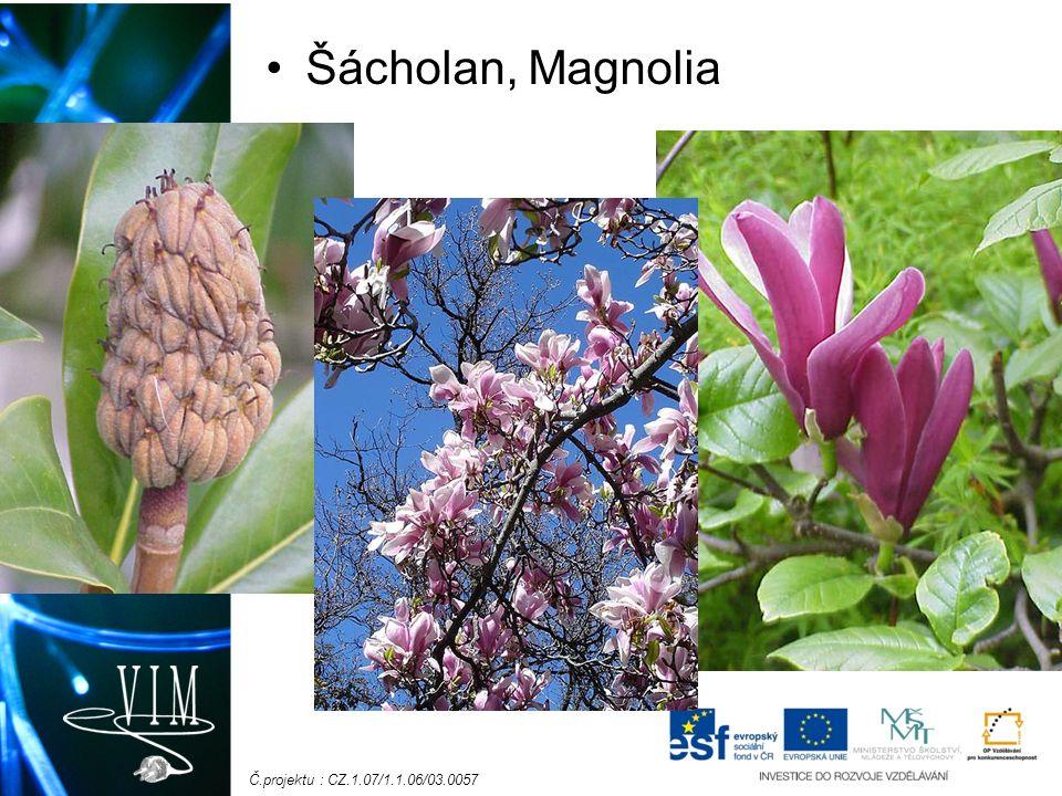Č.projektu : CZ.1.07/1.1.06/03.0057 Šácholan, Magnolia