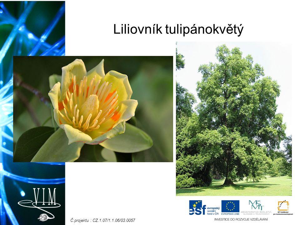 Č.projektu : CZ.1.07/1.1.06/03.0057 Liliovník tulipánokvětý