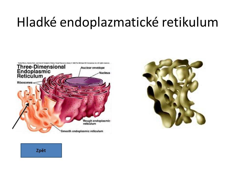 Hladké endoplazmatické retikulum Zpět
