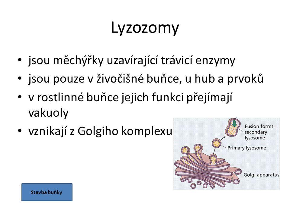 Lyzozomy jsou měchýřky uzavírající trávicí enzymy jsou pouze v živočišné buňce, u hub a prvoků v rostlinné buňce jejich funkci přejímají vakuoly vznikají z Golgiho komplexu Stavba buňky