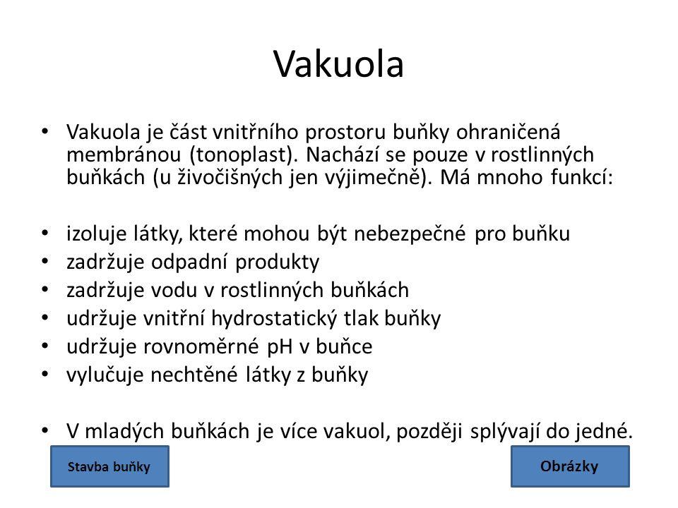 Vakuola Vakuola je část vnitřního prostoru buňky ohraničená membránou (tonoplast).