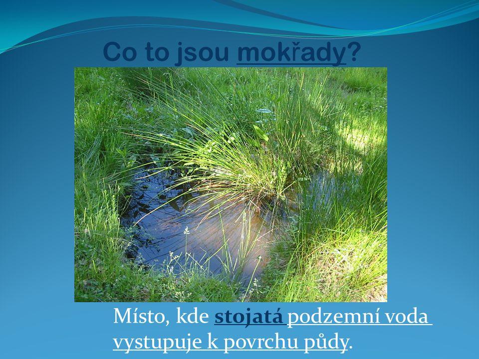 Co to jsou mok ř ady? Místo, kde stojatá podzemní voda vystupuje k povrchu půdy.