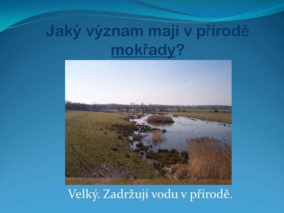Jaký význam mají v p ř írod ě mok ř ady? Velký. Zadržují vodu v přírodě.
