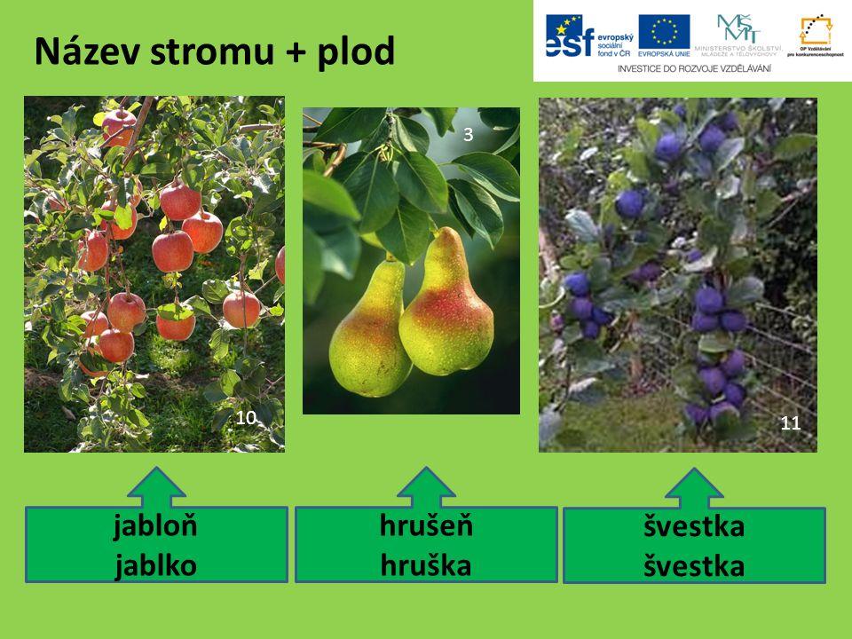 Použité zdroje: 11.Prunus domestica subsp insititia.