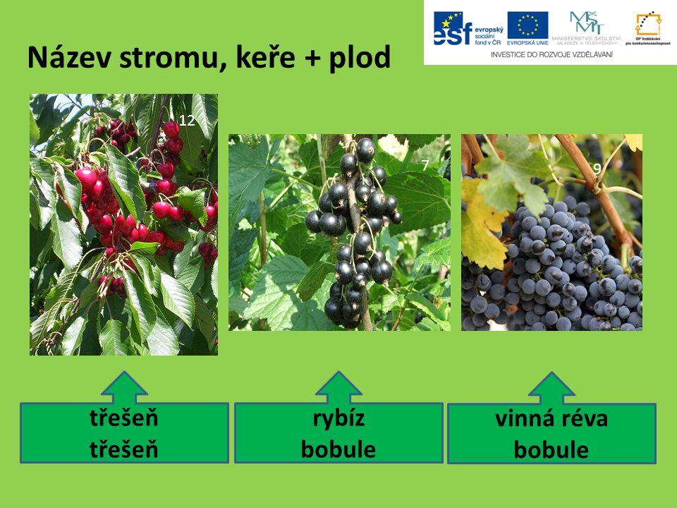Použité zdroje: 21.Kiwi (Actinidia chinensis) 1 Luc Viatour.
