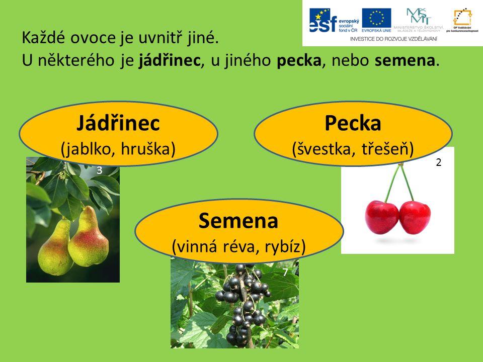 Každé ovoce je uvnitř jiné. U některého je jádřinec, u jiného pecka, nebo semena.