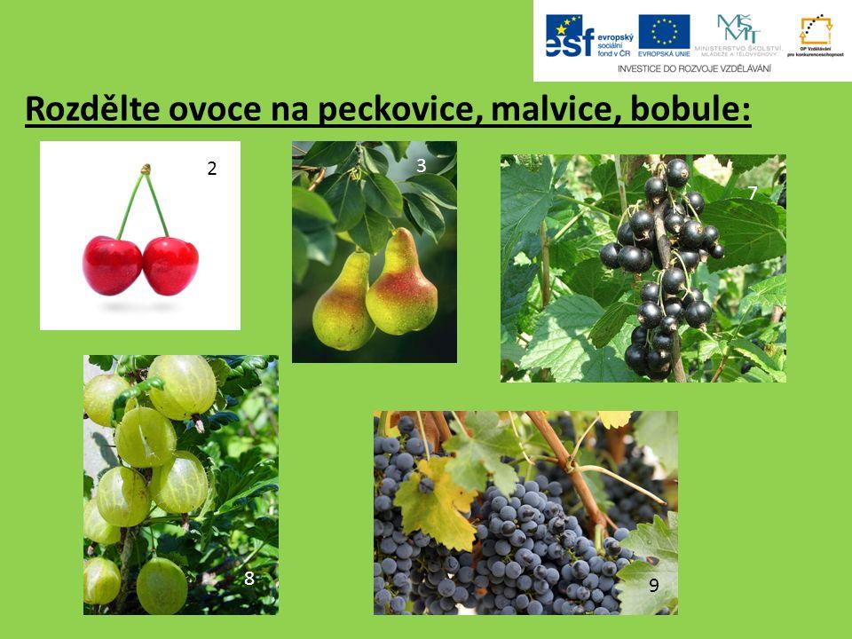 Rozdělte ovoce na peckovice, malvice, bobule: 2 3 7 8 9