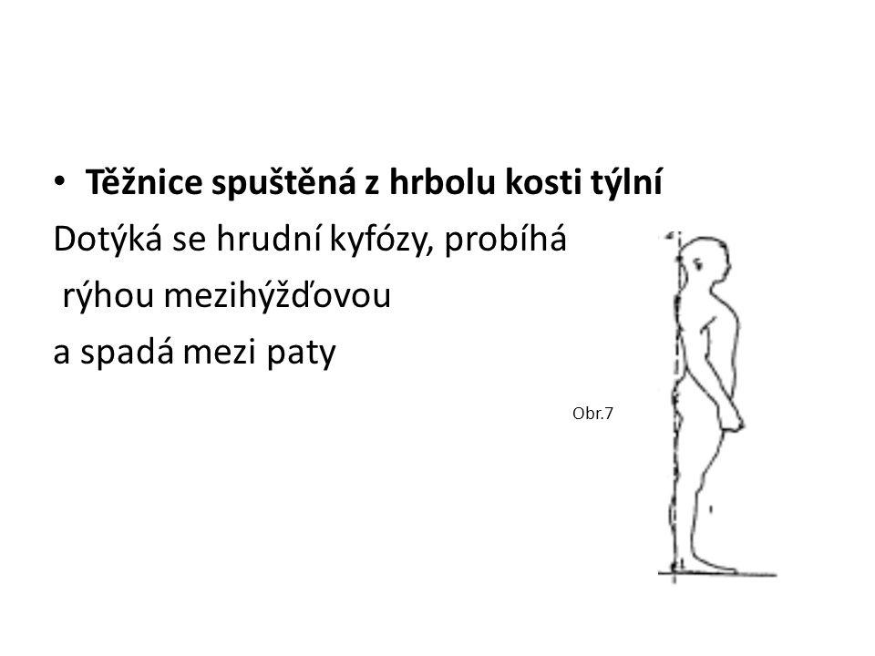 Těžnice spuštěná z hrbolu kosti týlní Dotýká se hrudní kyfózy, probíhá rýhou mezihýžďovou a spadá mezi paty Obr.7