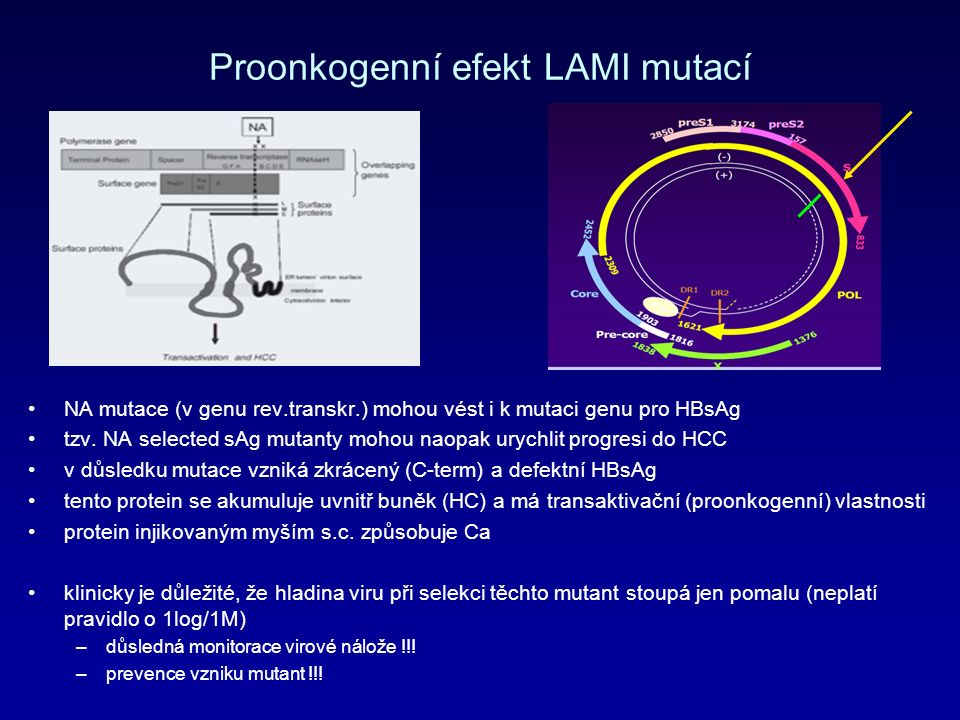 Proonkogenní efekt LAMI mutací NA mutace (v genu rev.transkr.) mohou vést i k mutaci genu pro HBsAg tzv.