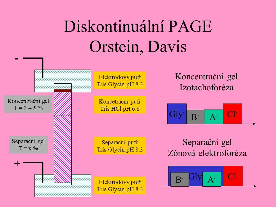Diskontinuální PAGE Orstein, Davis Koncentrační gel T = 3 – 5 % Separační gel T = x % Elektrodový pufr Tris Glycin pH 8.3 Koncetrační pufr Tris HCl pH 6.8 Separační pufr Tris Glycin pH 8.3 Elektrodový pufr Tris Glycin pH 8.3 Cl - Gly - B-B- A-A- Cl - Gly - B-B- A-A- Separační gel Zónová elektroforéza Koncentrační gel Izotachoforéza + -