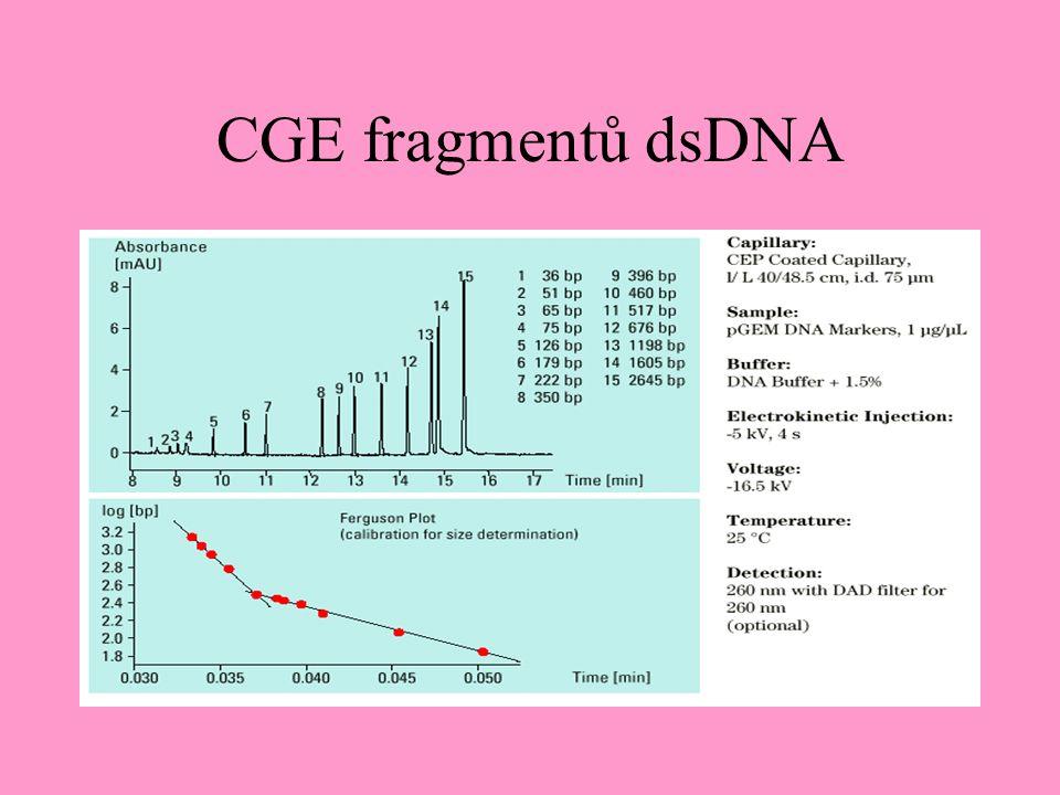 CGE fragmentů dsDNA