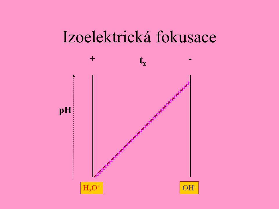 Izoelektrická fokusace + - H3O+H3O+ OH - pH txtx