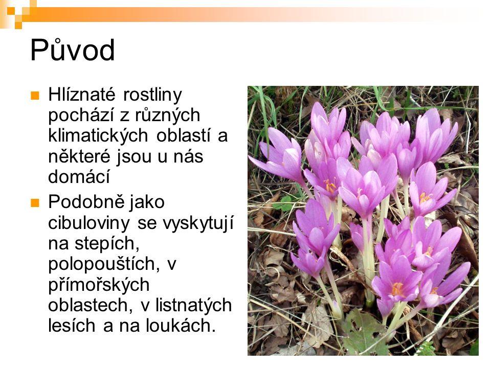 Původ Hlíznaté rostliny pochází z různých klimatických oblastí a některé jsou u nás domácí Podobně jako cibuloviny se vyskytují na stepích, polopouštích, v přímořských oblastech, v listnatých lesích a na loukách.