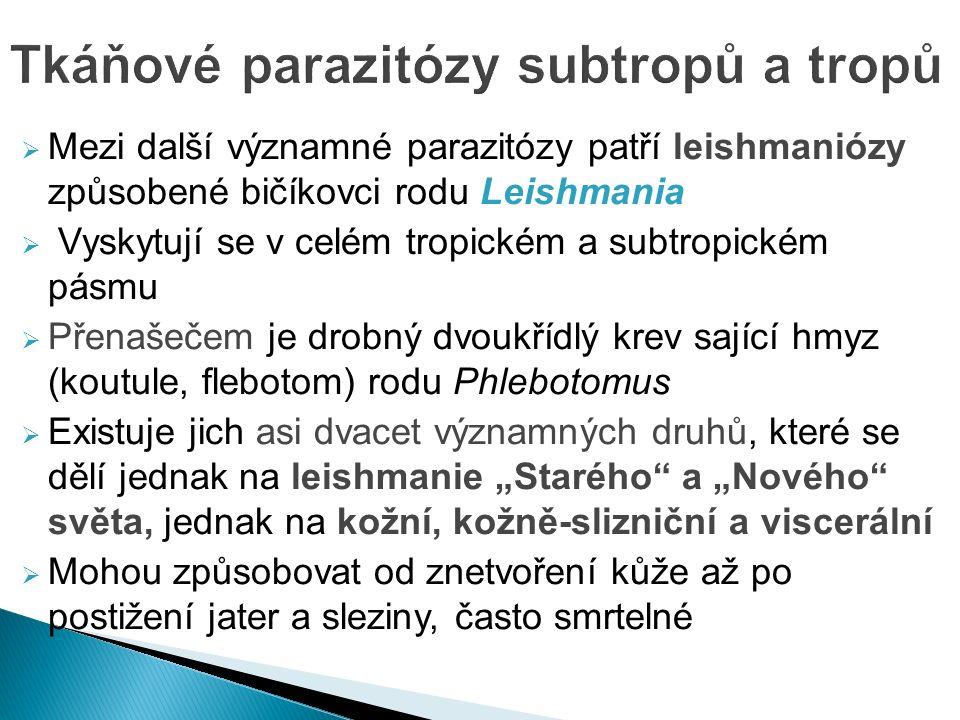 """ Mezi další významné parazitózy patří leishmaniózy způsobené bičíkovci rodu Leishmania  Vyskytují se v celém tropickém a subtropickém pásmu  Přenašečem je drobný dvoukřídlý krev sající hmyz (koutule, flebotom) rodu Phlebotomus  Existuje jich asi dvacet významných druhů, které se dělí jednak na leishmanie """"Starého a """"Nového světa, jednak na kožní, kožně-slizniční a viscerální  Mohou způsobovat od znetvoření kůže až po postižení jater a sleziny, často smrtelné"""