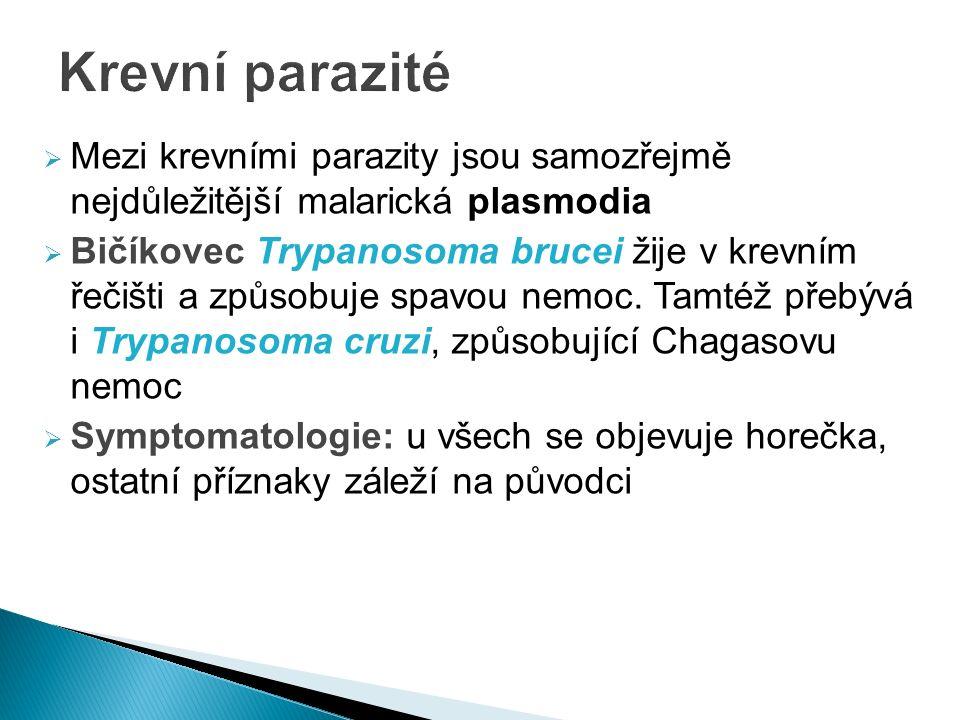  Mezi krevními parazity jsou samozřejmě nejdůležitější malarická plasmodia  Bičíkovec Trypanosoma brucei žije v krevním řečišti a způsobuje spavou nemoc.