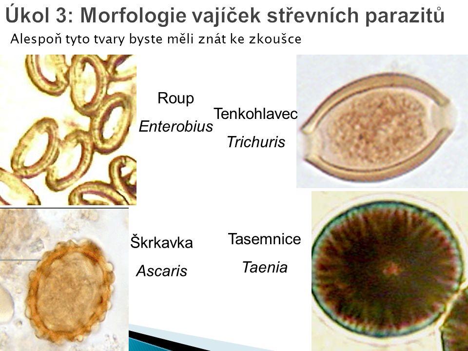 Alespoň tyto tvary byste měli znát ke zkoušce Úkol 3: Morfologie vajíček střevních parazitů Roup Enterobius Škrkavka Ascaris Tenkohlavec Trichuris Tasemnice Taenia