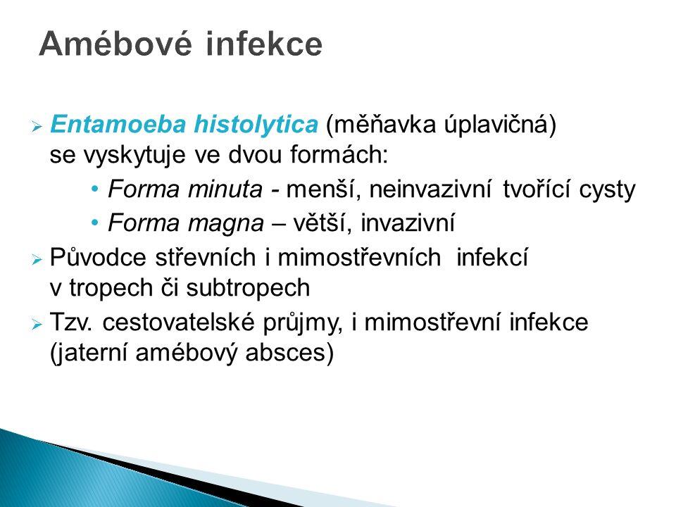  Entamoeba histolytica (měňavka úplavičná) se vyskytuje ve dvou formách: Forma minuta - menší, neinvazivní tvořící cysty Forma magna – větší, invazivní  Původce střevních i mimostřevních infekcí v tropech či subtropech  Tzv.
