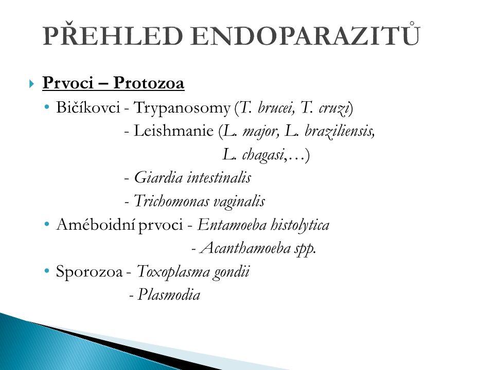  Prvoci – Protozoa Bičíkovci - Trypanosomy (T. brucei, T.