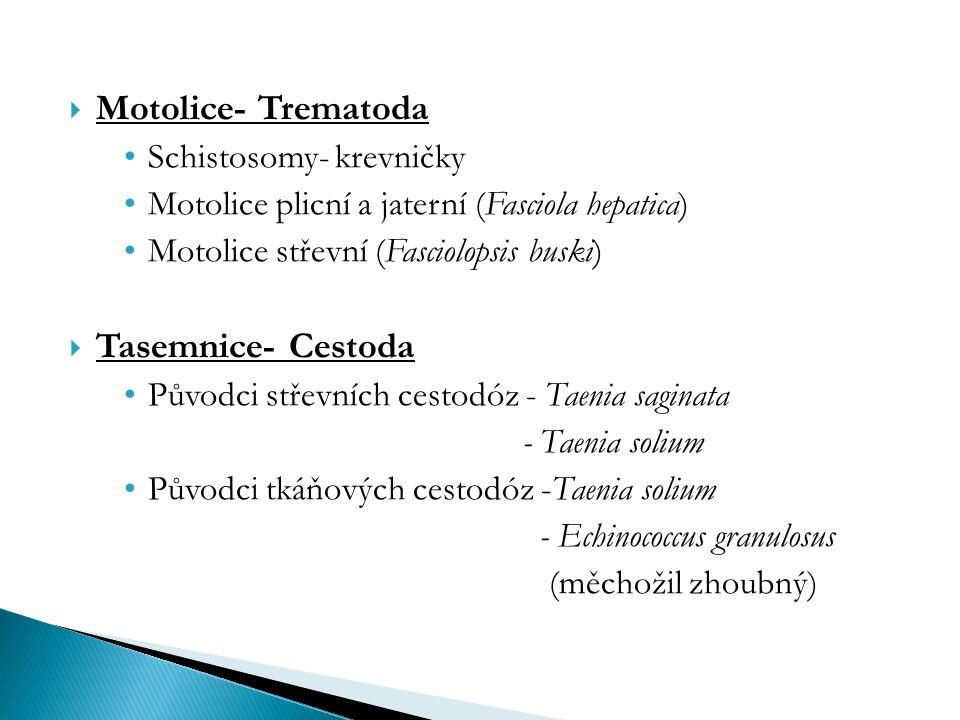  Motolice- Trematoda Schistosomy- krevničky Motolice plicní a jaterní (Fasciola hepatica) Motolice střevní (Fasciolopsis buski)  Tasemnice- Cestoda Původci střevních cestodóz - Taenia saginata - Taenia solium Původci tkáňových cestodóz -Taenia solium - Echinococcus granulosus (měchožil zhoubný)