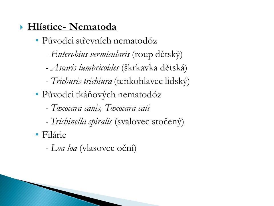  Hlístice- Nematoda Původci střevních nematodóz - Enterobius vermicularis (roup dětský) - Ascaris lumbricoides (škrkavka dětská) - Trichuris trichiura (tenkohlavec lidský) Původci tkáňových nematodóz - Toxocara canis, Toxocara cati - Trichinella spiralis (svalovec stočený) Filárie - Loa loa (vlasovec oční)